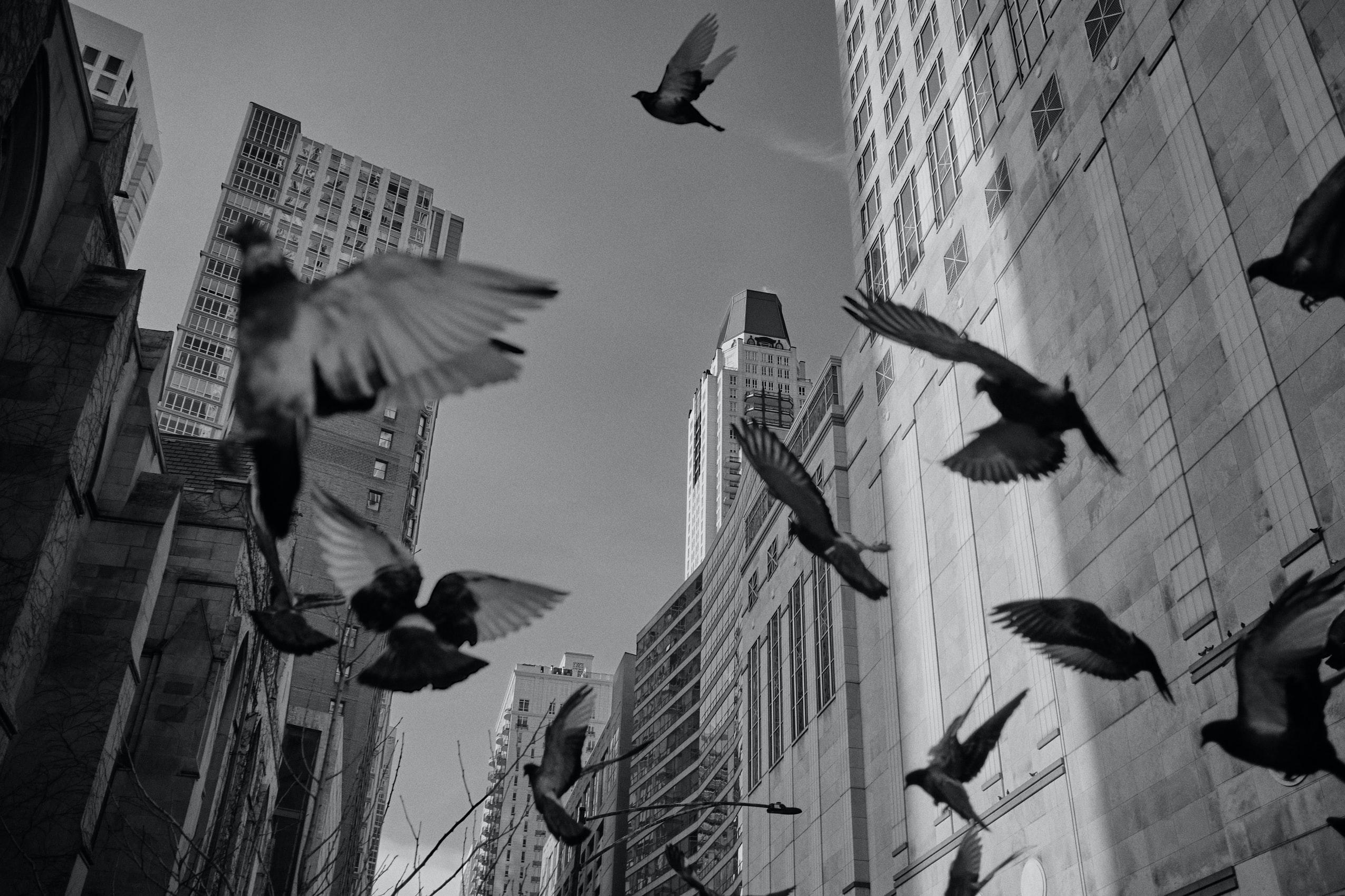 Pigeons in a city, Photo by Ian Battaglia